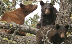 Bear Img 6